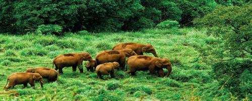 Gavi Eco Tourism, Gavi Eco Ecotourism Destination Kerala, Eco Ecotourism in Kerala