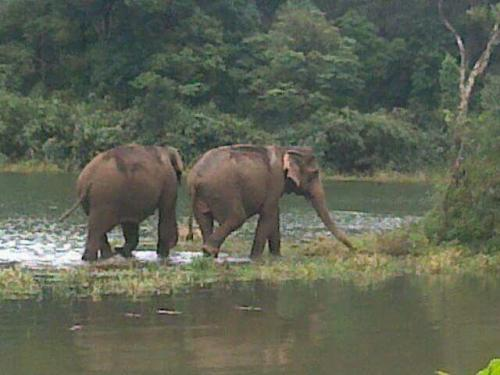 Periyar , gavi Jungle Safari