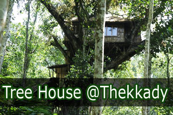 tree house thekkady