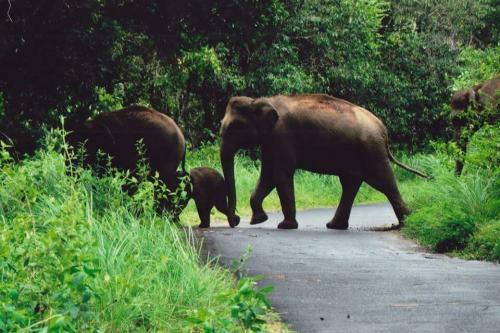 Periyar , gavi Jungle Safari